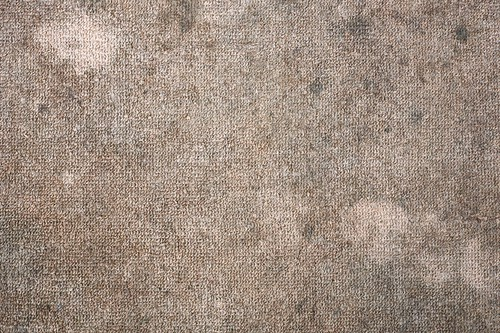 Will Carpet Cleaning Remove Mold?