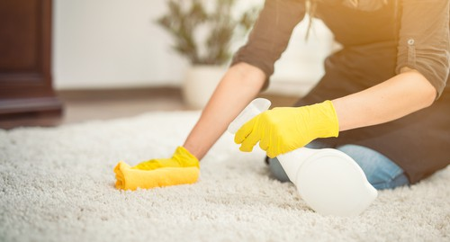How to Get Dog Urine Smell Out Of Carpet?