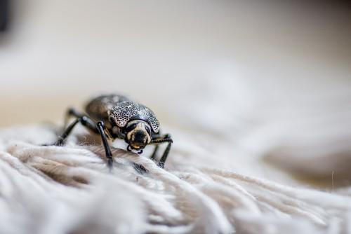 What Happens When You Don't Vacuum Carpet?